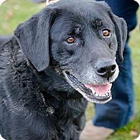 Adopt A Pet :: Bowser - Hastings, NY