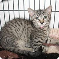 Adopt A Pet :: William - Shelton, WA