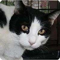 Adopt A Pet :: Nico and Leo - Frederick, MD