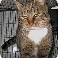 Adopt A Pet :: Smooches - Shelton, WA