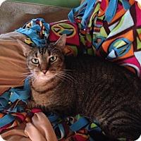 Adopt A Pet :: Giorgio - New Port Richey, FL