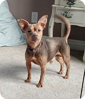 Chihuahua Mix Dog for adoption in Meridian, Idaho - Lucky
