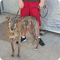 Adopt A Pet :: Kickin It - Knoxville, TN