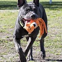 Adopt A Pet :: Rex - Palm Springs, CA