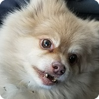 Adopt A Pet :: Mojo - Las Vegas, NV