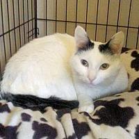 Adopt A Pet :: Chloe - Petersburg, VA