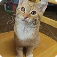 Adopt A Pet :: Sonny - Burlington, NC
