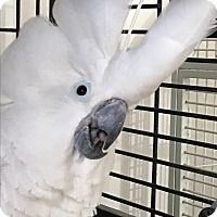 Adopt A Pet :: Lucky - Punta Gorda, FL