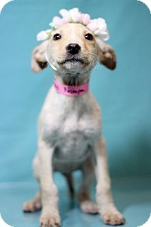 Terrier (Unknown Type, Medium) Mix Puppy for adoption in Waldorf, Maryland - Nampa