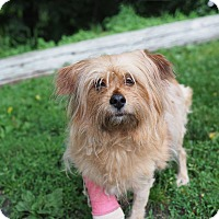 Adopt A Pet :: Nellie - Whitehall, PA