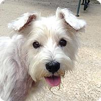 Adopt A Pet :: MERYLN - Frisco, TX