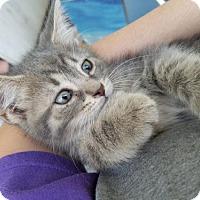 Adopt A Pet :: Six - Taylor, MI