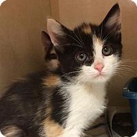 Adopt A Pet :: Ellen - Bauxite, AR