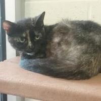 Adopt A Pet :: GiGi - Cincinnati, OH