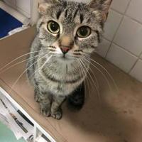 Adopt A Pet :: Hannah - Buffalo, NY