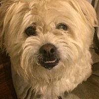 Adopt A Pet :: Robbie - Oak Ridge, NJ