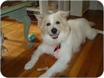 Border Collie Mix Dog for adoption in Prince William County, Virginia - Tan Border Collie