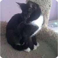 Adopt A Pet :: Domino - Mobile, AL