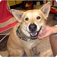 Adopt A Pet :: Wiley - Scottsdale, AZ