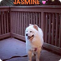 Adopt A Pet :: Jasmine - Dix Hills, NY