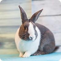 Adopt A Pet :: Sirah - Los Angeles, CA