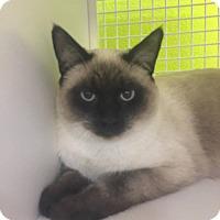 Adopt A Pet :: OTIS - Santa Monica, CA