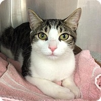 Adopt A Pet :: Frankie - East Brunswick, NJ