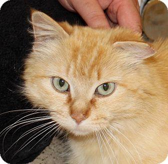 Domestic Longhair Cat for adoption in Battle Creek, Michigan - Juno