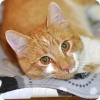 Adopt A Pet :: Lincoln - Liberty, NC