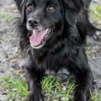 Adopt A Pet :: Mazey - Loxahatchee, FL