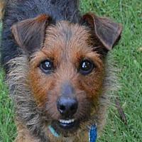 Adopt A Pet :: ROCCO - Plano, TX