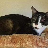 Adopt A Pet :: Regina - Hudson, NY