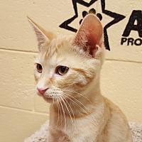 Adopt A Pet :: Aslan - Smithfield, NC