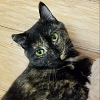 Adopt A Pet :: Catherine - Sheridan, WY
