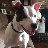 Adopt A Pet :: Teagan - Gilberts, IL