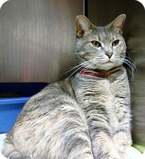 Calico Cat for adoption in Marietta, Georgia - ATHENA (R)