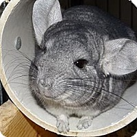 Adopt A Pet :: Chewy - Virginia Beach, VA