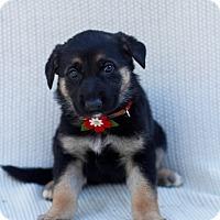 Adopt A Pet :: Jodie - Auburn, CA