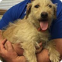 Adopt A Pet :: Marley-Pending Adoption - Omaha, NE