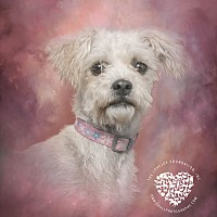 Adopt A Pet :: Alda - Inglewood, CA