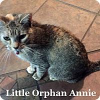 Adopt A Pet :: Little Orphan Annie - Bentonville, AR