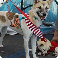 Adopt A Pet :: Lucas - La Mirada, CA