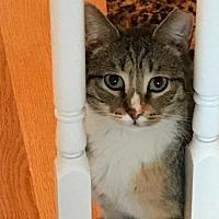 Adopt A Pet :: Lyra - Philadelphia, PA