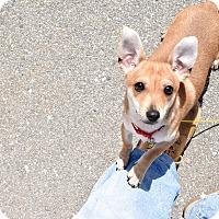 Adopt A Pet :: Apple Jack - Meridian, ID