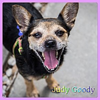Adopt A Pet :: Judy Goody - Hollywood, FL