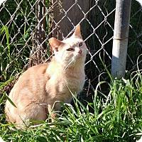 Adopt A Pet :: Banchee - Kelso/Longview, WA