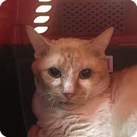 Adopt A Pet :: Wallaroo - Menands, NY