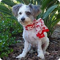 Adopt A Pet :: Muffin - Rancho Palos Verdes, CA