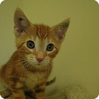 Adopt A Pet :: Persimmons - Milwaukee, WI