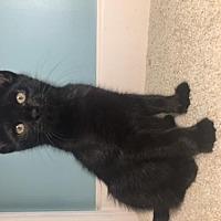Adopt A Pet :: Magic - Savannah, GA